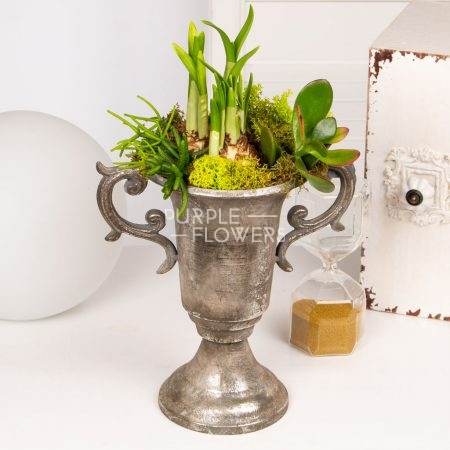 Daffodil bulbs and succulents urn